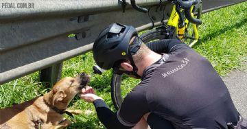 Ciclistas resgatam cão ferido com ajuda da concessionária em rodovia em SP
