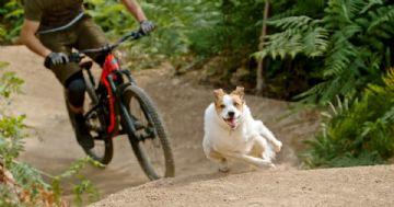 Vídeo - Shimano homenageia os cachorros companheiros de trilhas de bike